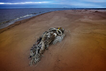 Rubbish From Sticks, Rope And Pieces Of Mesh Washed Up On The Shore Of The Bay.