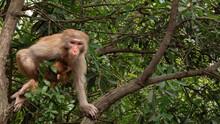 Monkeyu In Zhang Jia Jie Forest