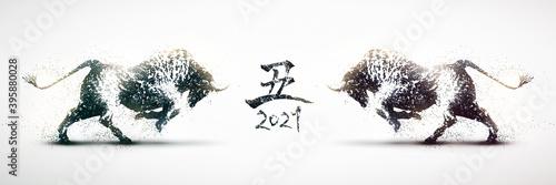 Fototapeta 向かい合う闘牛のシルエット 2021年丑年のバナー 白黒の粒子