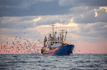 Return Of The Fishing Seiner After The Catch