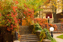 House Porch With Autumn Vegetation. Nice View, Landscaping.