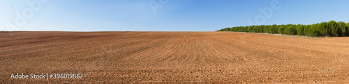 Fototapeta Panoramic view of landscape with agricultural land, on a slope, recently plowed and prepared for cultivation, with a pine plantation in the background  obraz