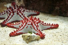 Red White Starfish On The Bottom Of The Water
