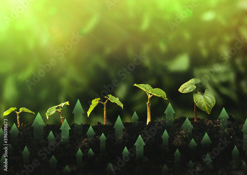 Green business investment. Concept of development and growth of ecology in worldwide.  - fototapety na wymiar