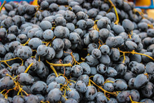Rip Blue Bunches Of Grapes