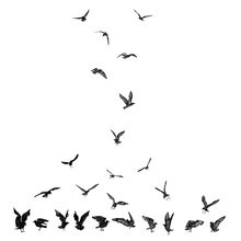 Set Of Black Hand Drawn Strokes Birds Seagulls, Flock. Drawing Sketch Of Sea Birds. On White Background. Inspirational Body Flash Tattoo Ink. Vector.