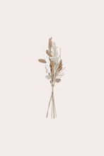 Dried Flowers Design Botanical Element For Invitations, Wedding Cards, Announcements.