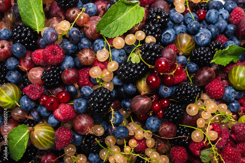 Gooseberries, blueberries, mulberry, raspberries, white and red currants Wallpaper Mural