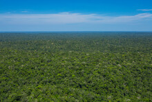 Aerial Photo Of The Brazilian Amazon Rainforest Canopy From The Top Of A Scientific Tower Station In The Middle Of Amazonas Estate.