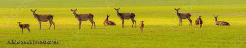 Young roe deer in nature.. Wallpaper Mural