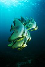 Underwater Sealife Images