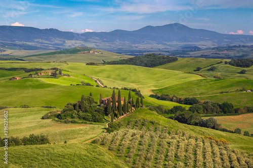 Fototapeta premium Beautiful olive plantation and rural scenery in Tuscany, Italy