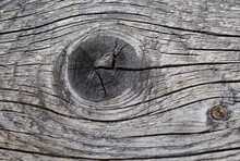 Texture Of Old Sawn Board With Knots