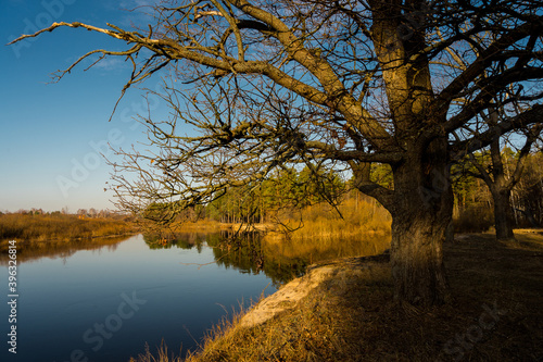 Fototapety, obrazy: autumn trees reflected in water