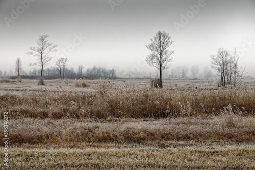 Vom Nebel weichgezeichnete Winter-Landschaft im Murnauer Moos, Süd-Bayern, Deutschland © si2016ab