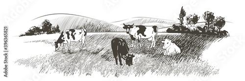 Cuadros en Lienzo Vector sketch Green grass field on small hills