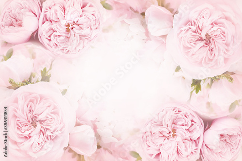 Leinwand Poster Delicate blossoming pink rose frame, blooming flowers pastel festive background,