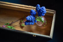 Blue Muscari In The Vase