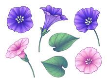 Hand Drawn Colorful Bindweed Flowers Set