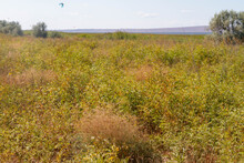 Plain With Orange Grass. Dry Vegetation In A Hot Climate In Summer.