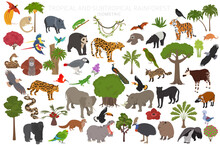 Tropical And Subtropical Rainforest Biome, Natural Region Infographic. Amazonian, African, Asian, Australian Rainforests. Animals, Birds And Vegetations Ecosystem 3d Isometric Design Set