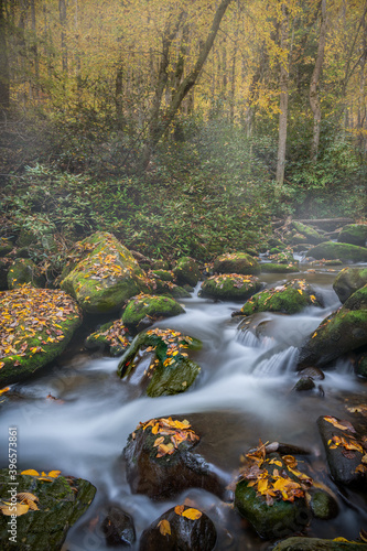 Gently Flowing Stream Coursing Through Fall Colors on a foggy Morning #396573861