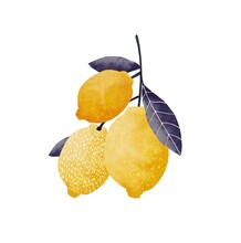 Digital Illustration Of Yellow Lemons On A Branch With Blue Leaves, On A White Background