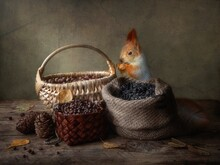 Still Life With Nuts, Sunflower Seeds And Small Squirrel