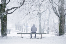 One Young Adult Man Sitting On Bench Between Trees At Park In White Winter Day After Blizzard. Fresh First Snow. Thinking About Life. Spending Time Alone In Nature. Peaceful Atmosphere. Back View.