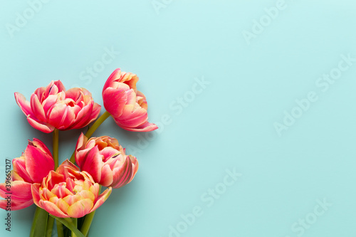 Fotografie, Obraz Spring flowers, tulips on pastel colors background