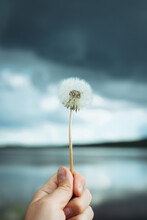 Close Up Of Woman's Hand Holding Common Dandelion Flower Against Cloudy Sky