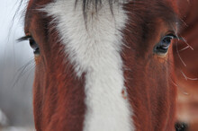 Beautiful Long Lashes  Over Loving Eyes Of A Clydesdale Horse