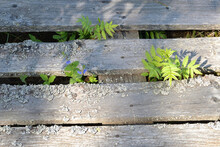 Old Rustic Wooden Fence Covere...