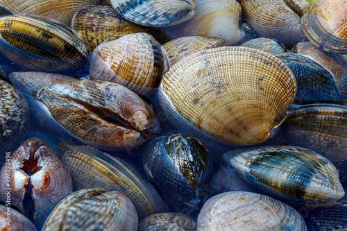 Fotografie, Tablou fresh clams soak for kitchens