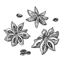 Vector Sketch Illustration Of Star Anise. Hand Drawn Kitchen Herb