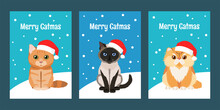 Merry Christmas Greeting Cards Set With Lovely Cats Wearing Red Santa Hats: Persian Cat, Siamese Cat And British Cat. Inscription Merry Catmas. Flat Vector Collection For Your Design