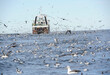 canvas print picture - Trawler and seabirds off South Africa