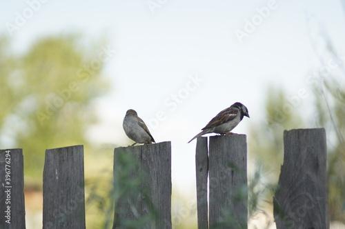 Fototapeta premium Bird