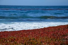 Monterey Peninsula Near Pebble Beach In California, Coast View Towards The Pacific Ocean, Rocky Coast And Colorful Plants On White Sand, Near Highway 1