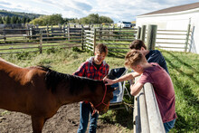 Young Male Ranchers Feeding Horse In Sunny Rural Ranch Pasture