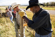 Ranchers Replacing Posts Of Barbed Wire Fence On Sunny Ranch