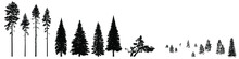 Set Of Wild Coniferous Trees Hand-drawn In Silhouette. Bundle Wild Coniferous Forest Trees, Firs, Pines, Mountain Pines, Ship Pines Composition Of Young Fir Trees, Spruce Forest. Isolated On A White.