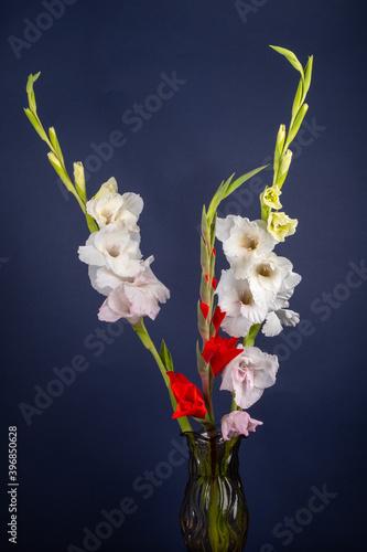 Fotografía bouquet of gladioli in a vase on a dark blue background