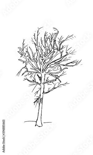 Fotografie, Tablou Hand-drawn isolated shrub bush