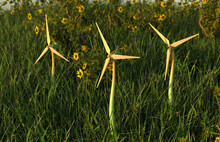 Three Wind Turbines In Field With Wildflowers