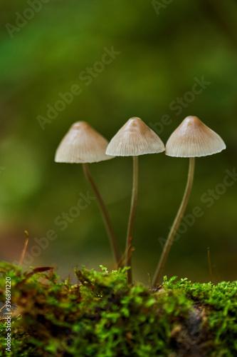 Obraz na plátně Mushroom colony on a tree