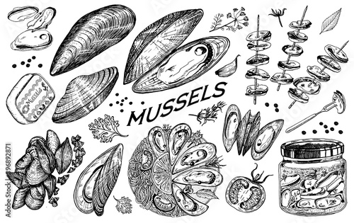 Fototapeta Sea mussels in vintage retro style. Nautical molluscs. Ocean food. Vector illustration. Hand drawn engraved retro sketch. Antique old monochrome style. obraz