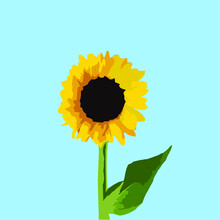 Sunflower With Sky Blue Background