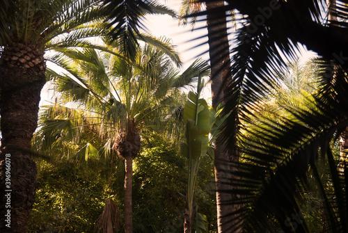 Tablou Canvas Equatorial environment