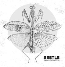 Realistic Hand Drawing And Polygonal Praying Mantis. Artistic Bug. Entomological Vector Illustration